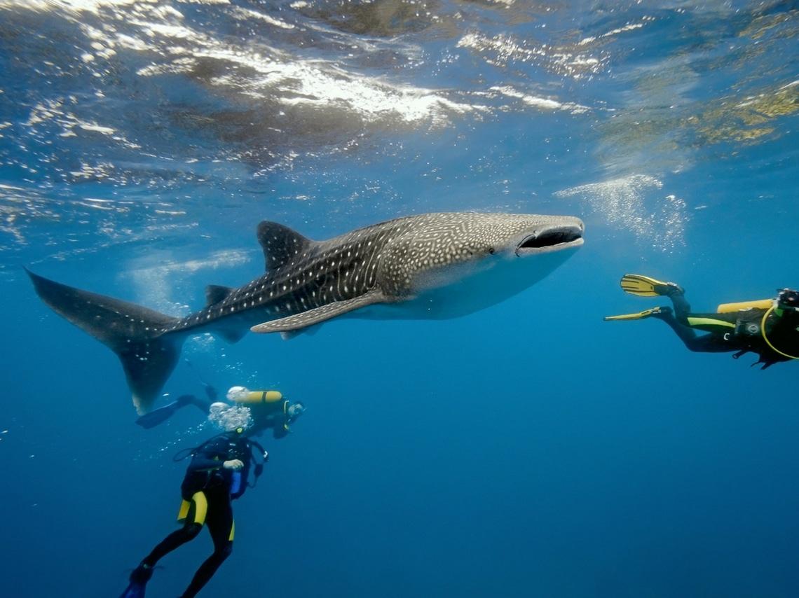 Où se baigner en Guadeloupe?