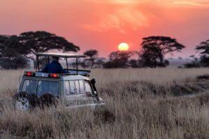 Où aller en safari en février?