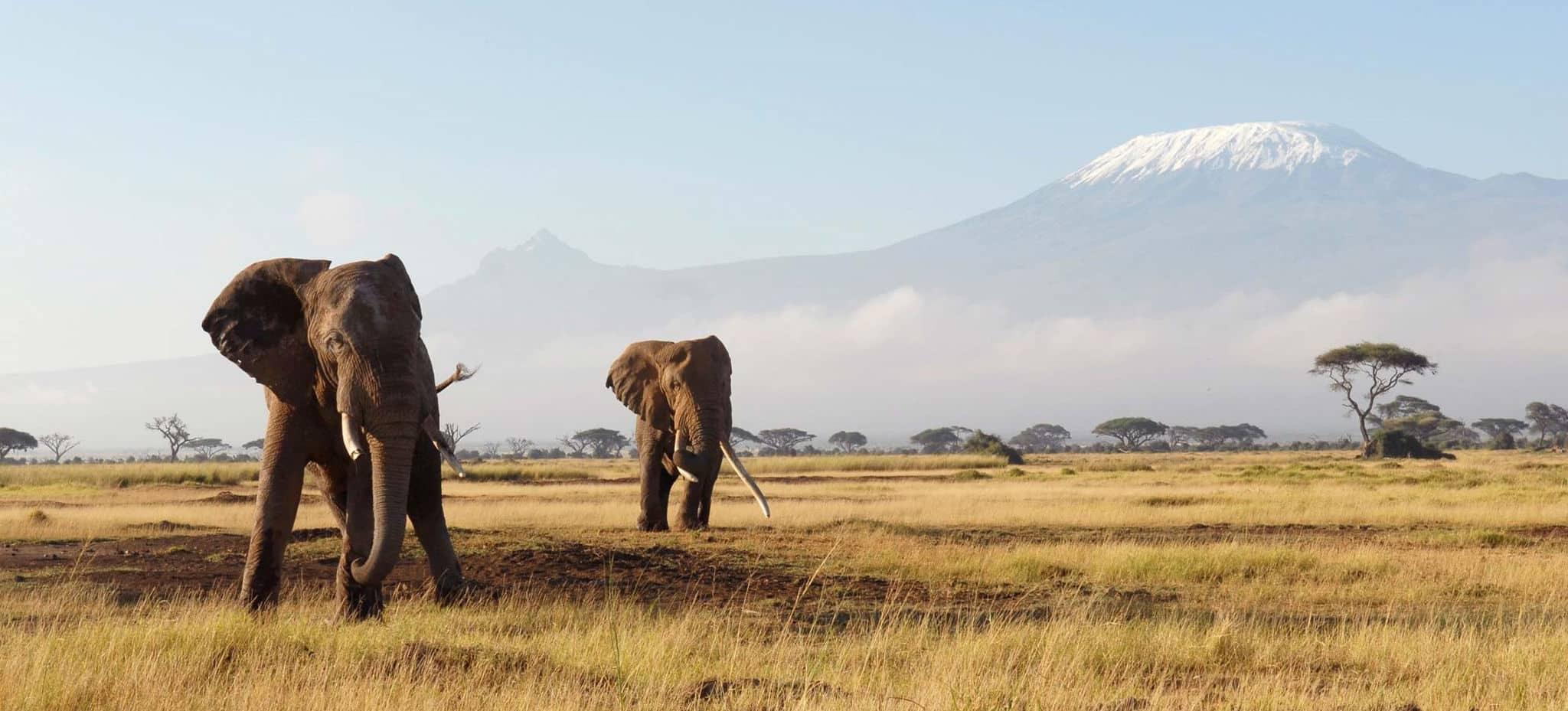 Quel est le meilleur endroit pour faire un safari?