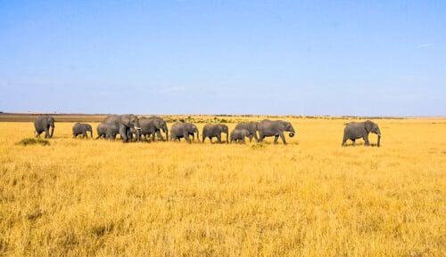 Quel est le meilleur pays pour un safari bon marché?