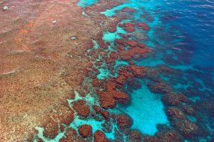 Pourquoi un récif corallien?