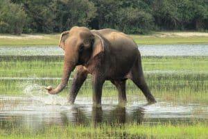 Quel temps fait-il au Sri Lanka en mars?